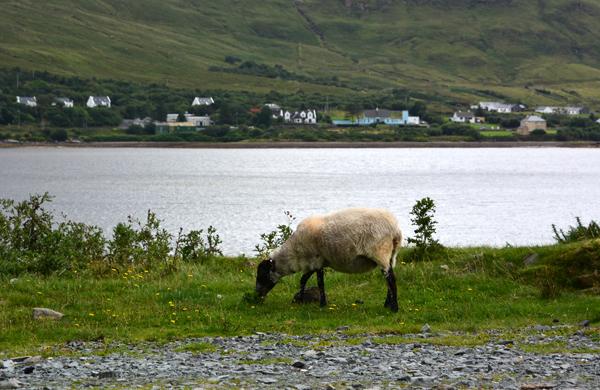 Irland2013_0143